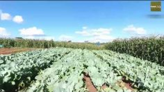How To engage youth in agriculture